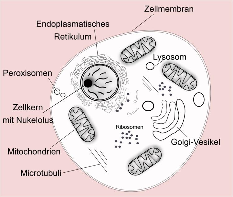 Eukaryoten Und Prokaryoten Im Vergleich 7
