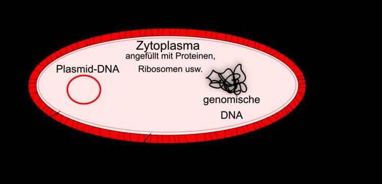 Prokaryoten Und Eukaryoten Im Vergleich Unterschiede